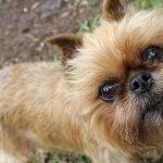 Cane bianco e nero: caratteristiche e le migliori razze